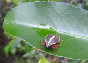 Bug, Thunderbird Park, open forest near creek