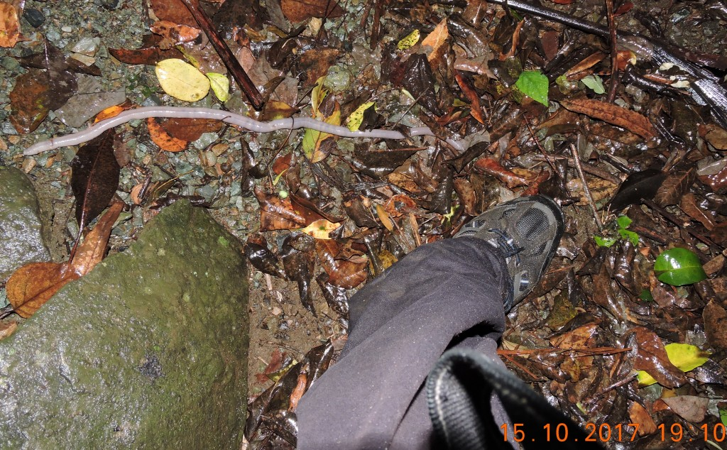 Giant earthworm  Skywalk