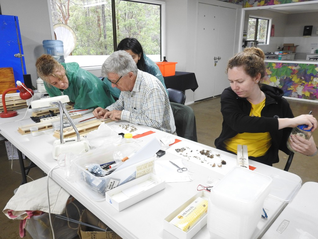 Roger Kitching and helpers sorting moths caught in light traps