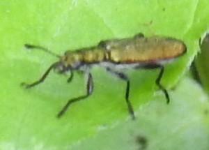 Beetle,ThunderbirdPark