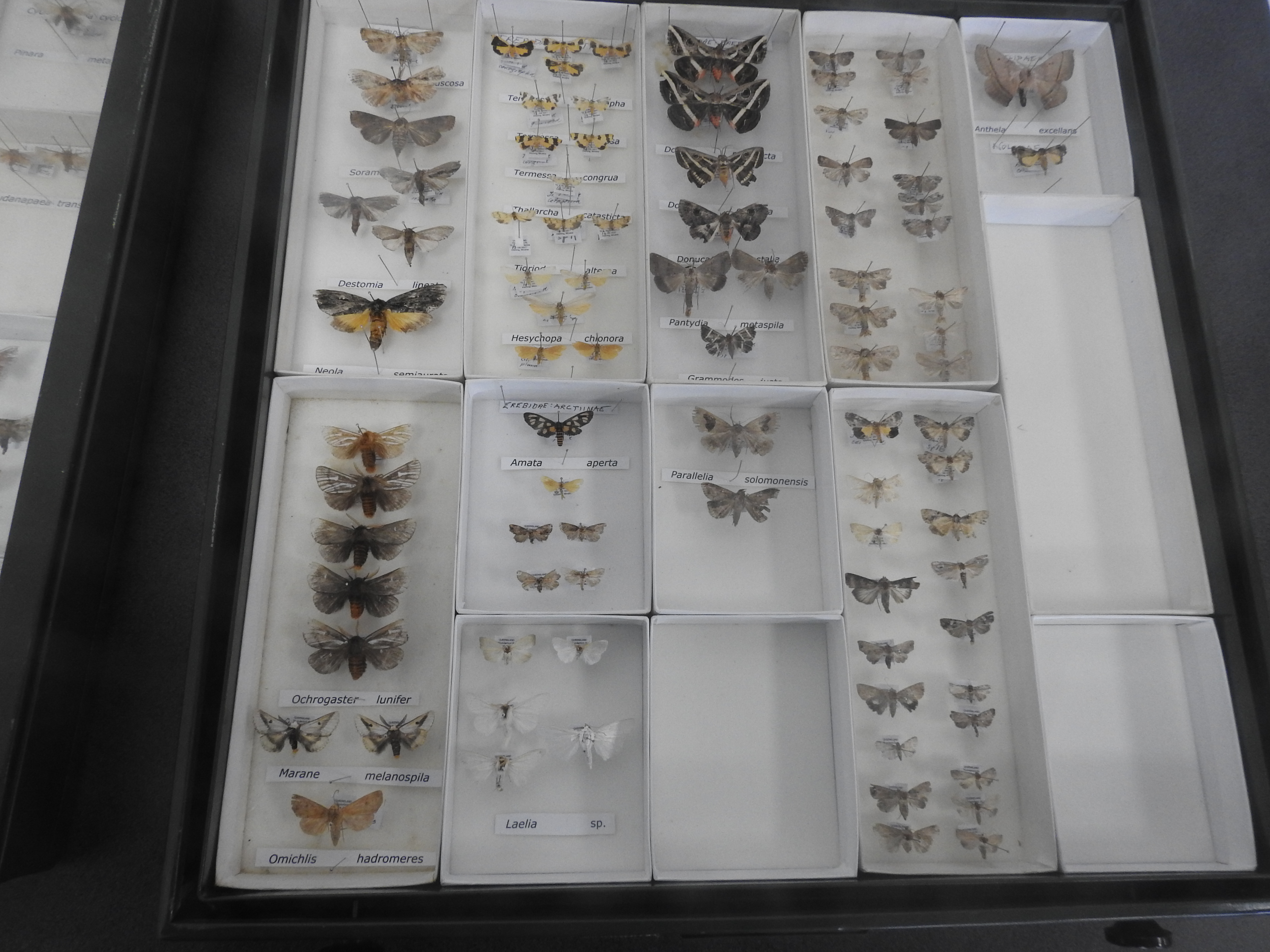 Some of the moths found in October