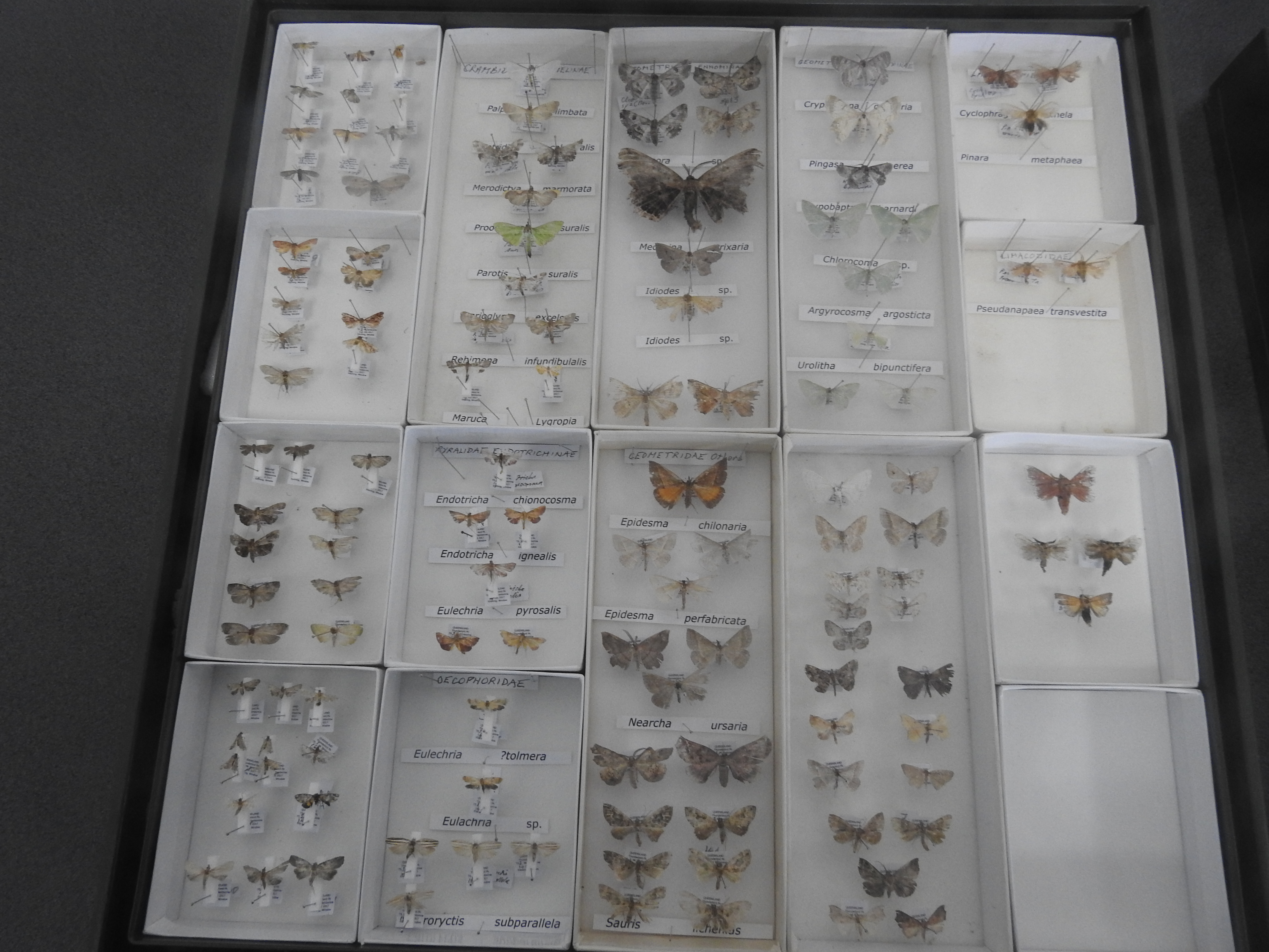 More moths found in October