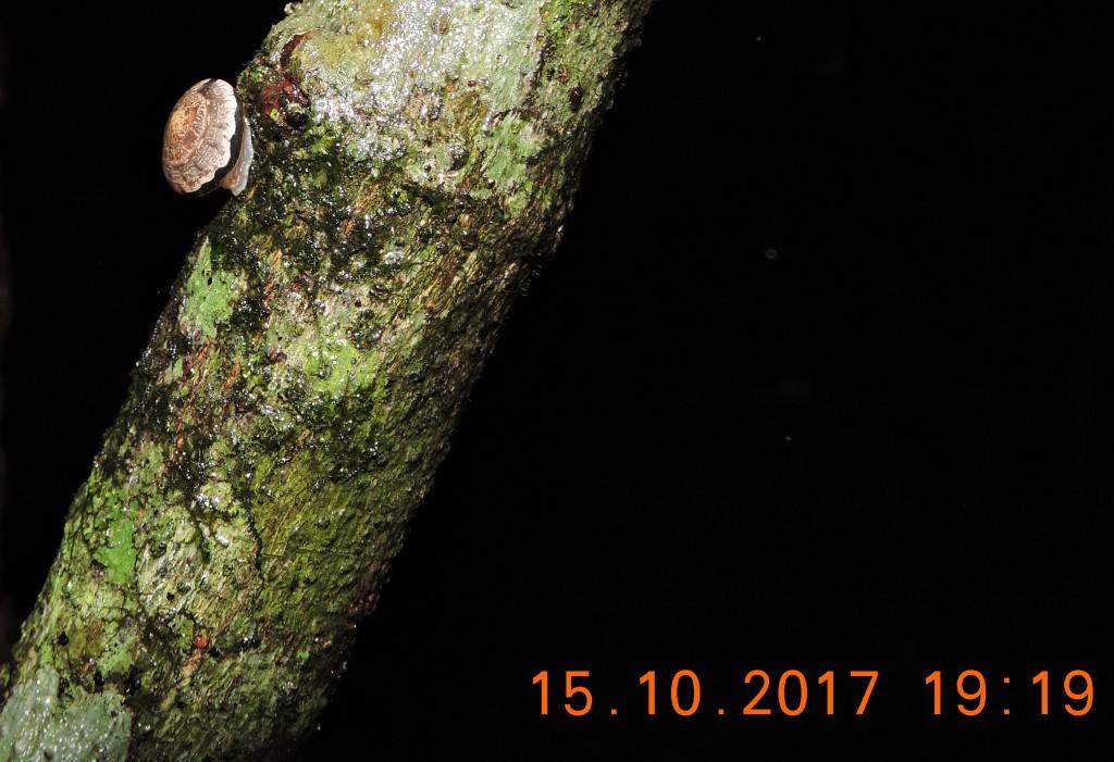 Semi-slug, night, Skywalk. Photo Darren Green